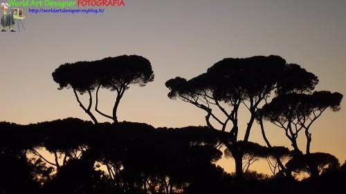 World art designer,foto,fotografia,fotografando,foto artistiche,foto natura, parco roma, tramonto,